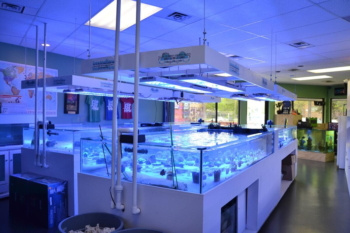 Aquarium shop presentaion in canada ledzeal for Aquarium shop